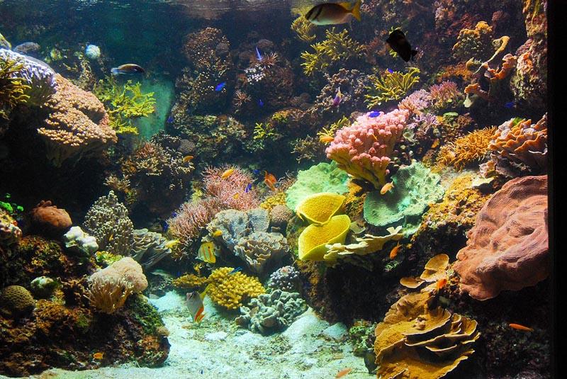 locations de vacances 224 l aquarium la rochelle et ses environs
