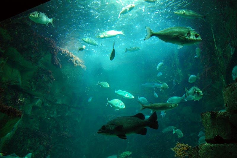 aquarium de La Rochelle est l?un des plus grands aquariums ...