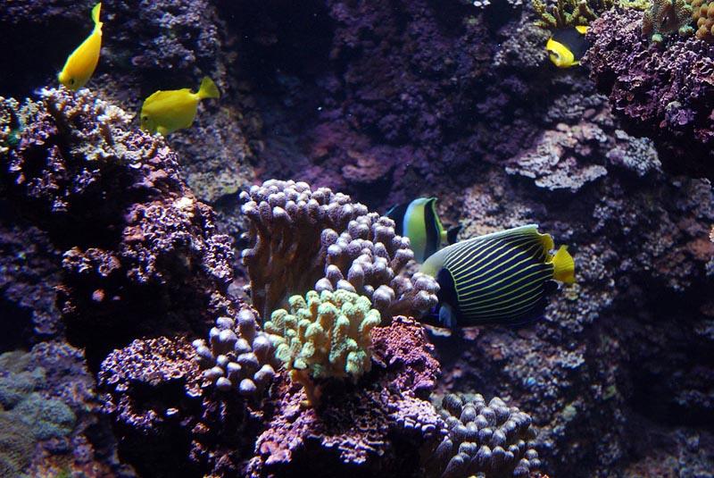 Chambres d 39 h tes l 39 aquarium la rochelle et ses environs - Chambres d hotes la rochelle et environs ...