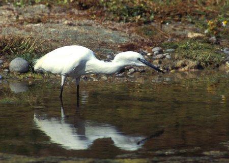 Chambres DHtes  Proximit Du Parc Ornithologique Du Marquenterre