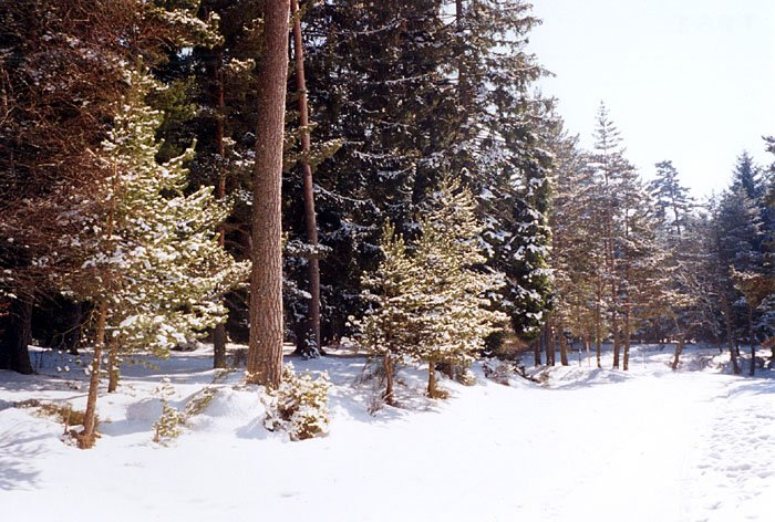La chaise dieu ski informatie en sneeuw dekking - Notre bergerie la chaise dieu ...